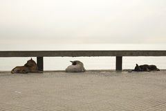 Drei Hundeschlaf am bewölkten Tag Stockbilder