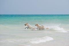 Drei Hundespielen Lizenzfreies Stockfoto