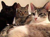 Drei Kätzchen auf einem Bett Stockbilder