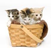 Drei Kätzchen in einem Korb lizenzfreie stockfotos