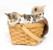 Drei Kätzchen in einem Korb stockfoto