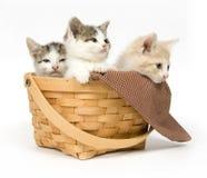 Drei Kätzchen in einem Korb stockfotografie