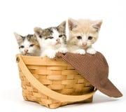 Drei Kätzchen in einem Korb Stockfotos