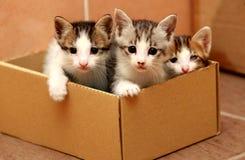 Drei Kätzchen im Papierkasten stockbild