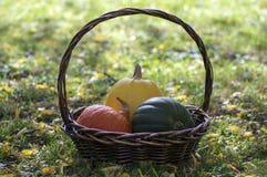 Drei Kürbise im Weidenkorb, im gelben Spaghettikürbis, im grünen Muskatellertraubenkürbis und in Orangenhokkaido-Kürbis, Herbstla Lizenzfreie Stockfotos