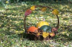 Drei Kürbise im Weidenkorb, im gelben Spaghettikürbis, im grünen Muskatellertraubenkürbis und in Orangenhokkaido-Kürbis, Herbstla Stockbild