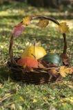 Drei Kürbise im Weidenkorb, im gelben Spaghettikürbis, im grünen Muskatellertraubenkürbis und in Orangenhokkaido-Kürbis, Herbstla Lizenzfreies Stockfoto