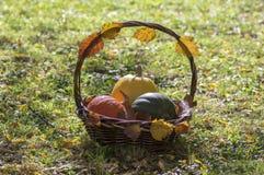 Drei Kürbise im Weidenkorb, im gelben Spaghettikürbis, im grünen Muskatellertraubenkürbis und in Orangenhokkaido-Kürbis, Herbstla Stockfoto