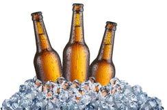 Drei kalte Flaschen Bier in den Eiswürfeln lizenzfreie stockbilder