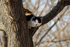 Drei Katzen Lizenzfreies Stockfoto