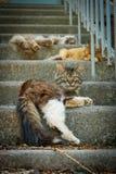 Drei Katzen auf Treppe Lizenzfreie Stockfotografie