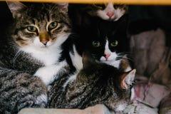 Drei Katzen betrachten das Kameraobjektiv stockfotografie