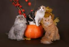 Drei Katzen in der des Herbstes Lebensdauer noch. Stockbilder