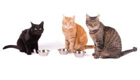 Drei Katzen, die behid ihre Lebensmittelschüsseln sitzen Stockbild