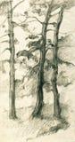Drei Kiefer in der Waldbleistift-Skizzenillustration Stockfoto