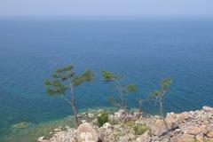 Drei Kiefern auf dem felsigen Ufer vom Baikalsee stockfotografie
