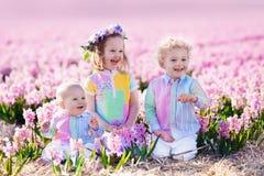 Drei Kinder, die auf dem schönen Hyazinthenblumengebiet spielen Lizenzfreies Stockbild
