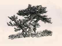 Drei kleine Bäume Stockbild