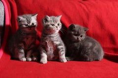 Drei kleine Kätzchen Stockbilder