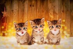 Drei kleine Kätzchen, die im Schnee mit Weihnachten-deco sitzen Stockfotografie