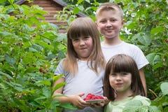 Drei kleine Kinder in den Büschen von Himbeeren lizenzfreie stockbilder