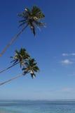 Drei Kokosnuss-Bäume Lizenzfreies Stockfoto