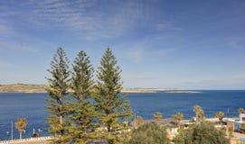 Drei Koniferenbäume gegen blauen Himmel und Blau sehen mit Malta-Insel im Hintergrund Stockbilder