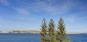 Drei Koniferenbäume gegen blauen Himmel und Blau sehen mit Malta-Insel im Hintergrund Lizenzfreies Stockbild