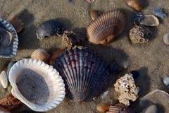 Drei korallenrote Stücke mit Seeoberteilen Stockfotografie