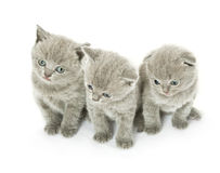 Drei Kätzchen über Weiß Stockbild