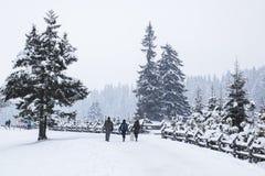 Drei Leute und Hund, die auf Straße des verschneiten Winters im Nebel, Kiefer f gehen Stockfotos