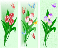 Drei Lieder mit einem Blumenstrauß der Tulpen Stockfotos