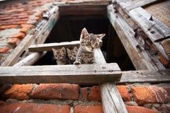 Drei liitle Kätzchen Stockfotografie