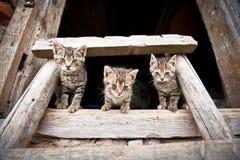 Drei liitle Kätzchen Stockbilder