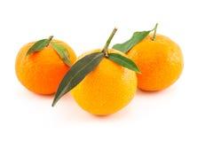 Drei Mandarinen oder Tangerinen mit Blättern Stockfotos