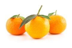 Drei Mandarinen oder Tangerinen mit Blättern Lizenzfreies Stockbild