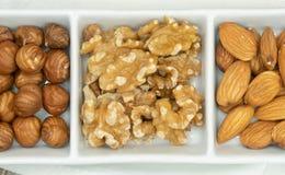 Drei Nüsse, Haselnuss, Mandel und Walnuss stockbilder