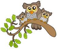 Drei nette Eulen auf Zweig Stockfotos