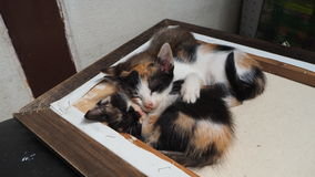 Drei nette Kätzchen Stockfotografie