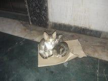 Drei nette Kätzchen, die auf Blatt sitzen lizenzfreies stockfoto