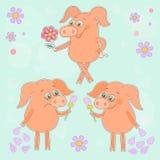 Drei nette Karikaturferkelaufkleber glücklich und traurige Schweine mit einer Blume in einer Hand Stockbilder