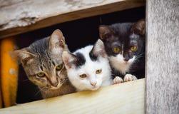 Drei nette Katzen Lizenzfreie Stockfotos