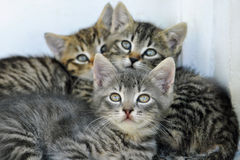 Drei nette Katzen, welche die Kamera betrachten Stockfotografie