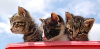 Drei nette Miezekatzen Lizenzfreies Stockfoto