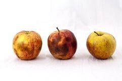 Drei nicht so frische Äpfel lizenzfreie stockfotos