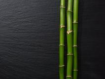 Drei Niederlassungen Bambus Lizenzfreies Stockfoto