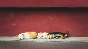 Drei obdachlose streunende Hunde, die auf der Straße schlafen Stockfotos