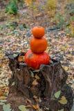 drei orange Kürbise liegen im Herbstwald auf einem hölzernen Baumstumpfstumpf lizenzfreies stockbild