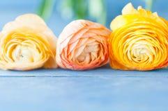 Drei Orange Ranunculus Lizenzfreies Stockfoto