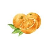 Drei Orangen watercolor Lizenzfreies Stockbild